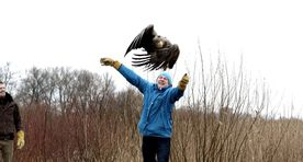Gallery: healed of poisoning, eagle flies free
