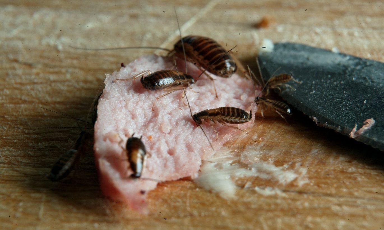 ставка фото домовых тараканов какой волшебный