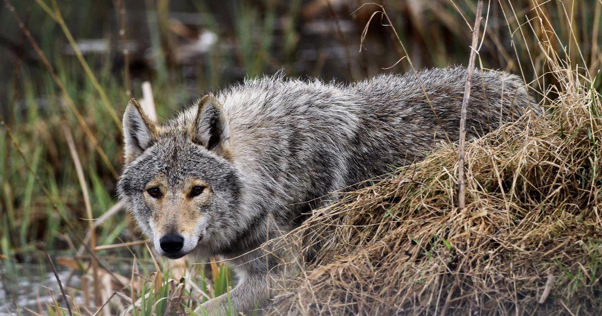 Pool maakonna huntide küttimismahust on täis