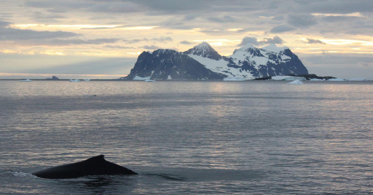 Paidest pärit akadeemik võtab polaarlaeval ette Antarktika-ekspeditsiooni