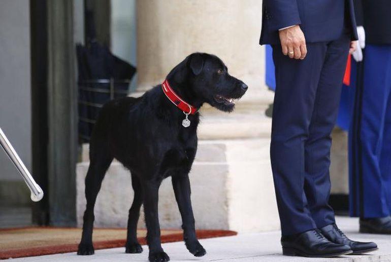 Собачка Макрона справила нужду вЕлисейском замке вовремя существенной встречи президента
