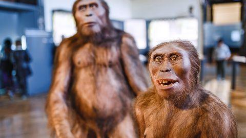 Neandertali inimesed Viini muuseumis.