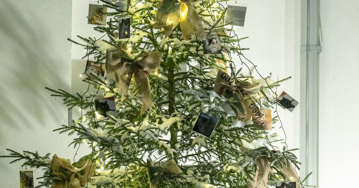 Jõulupuu fotoehted aitavad varjupaigalised koju