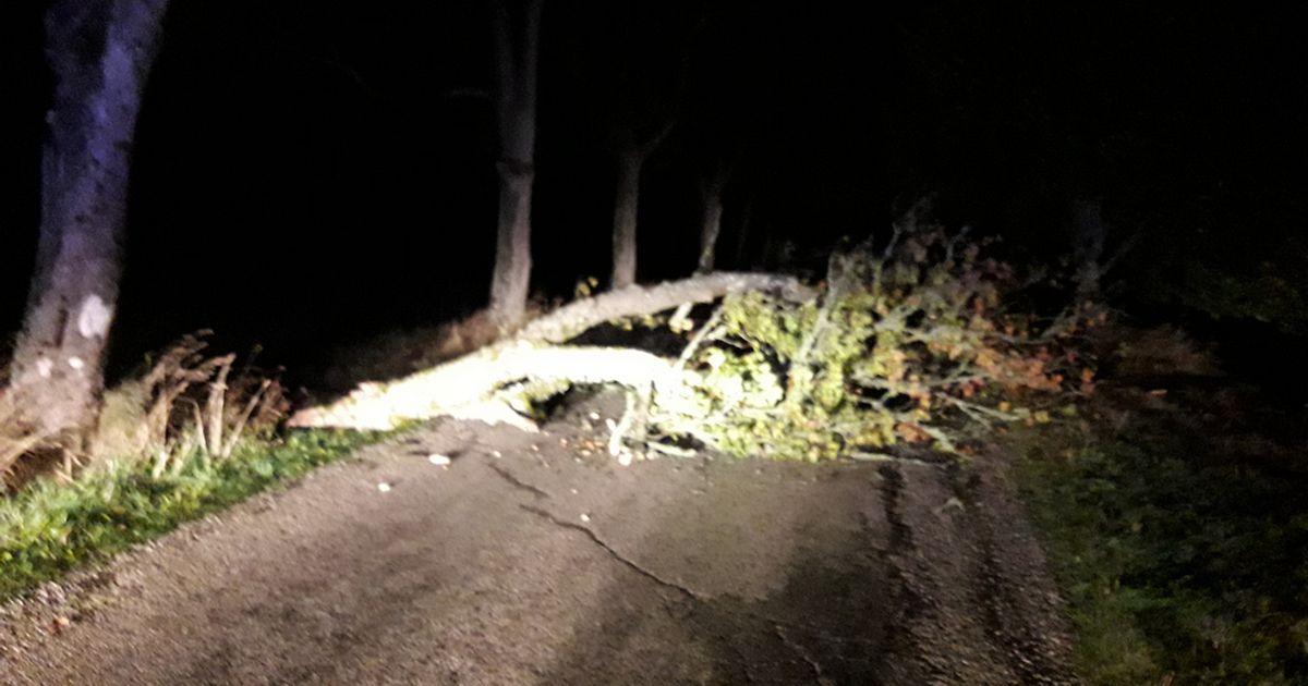 Tuul murdis teele oksi ja puid