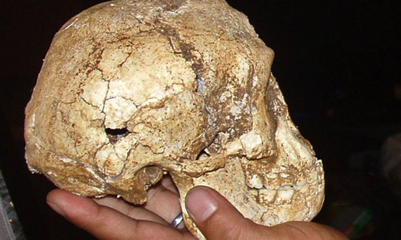 human fossil findings in indonesia Mysterious chinese fossils may be new human  findings are fossil evidence that this region may not  on the island of flores in indonesia.
