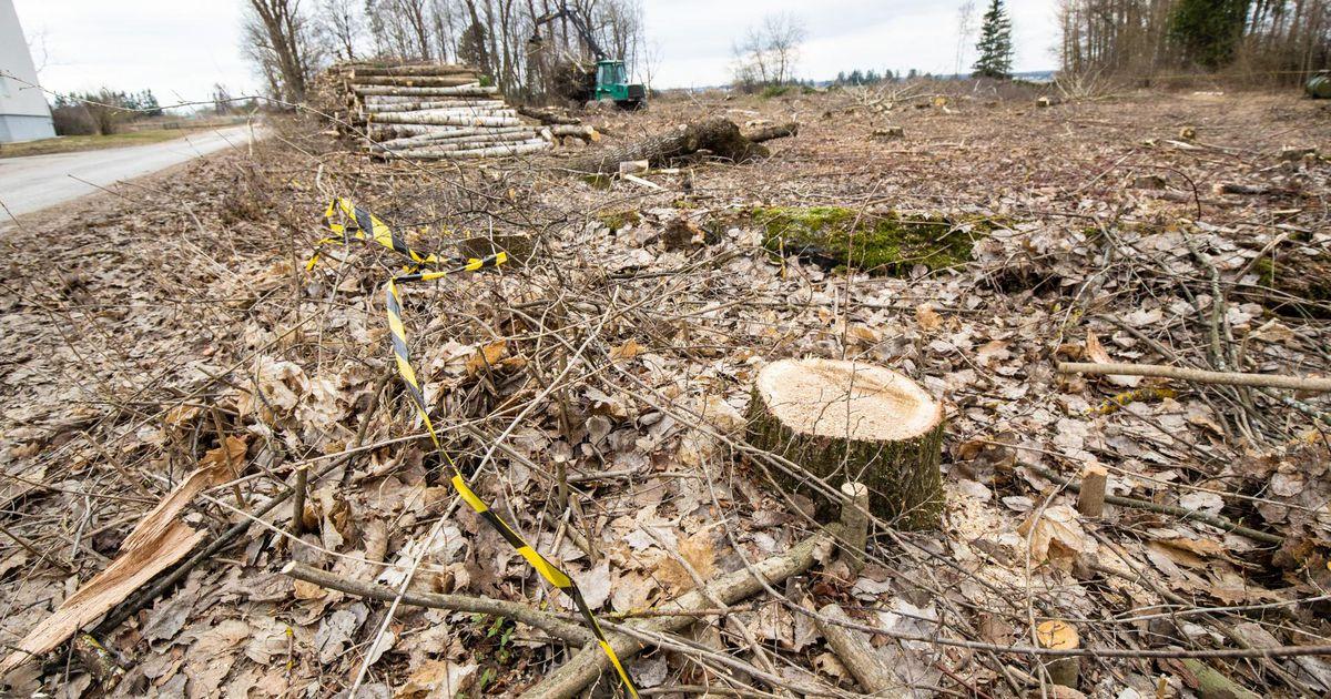 Puud pandi pihta