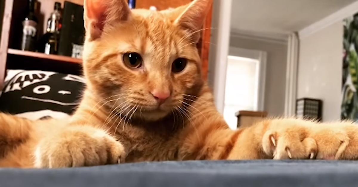 Video: kassi lisavarbad näevad välja kui üleliigsed käpad