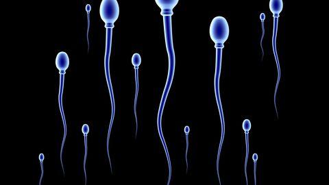 Spermatosoidid ehk spermid