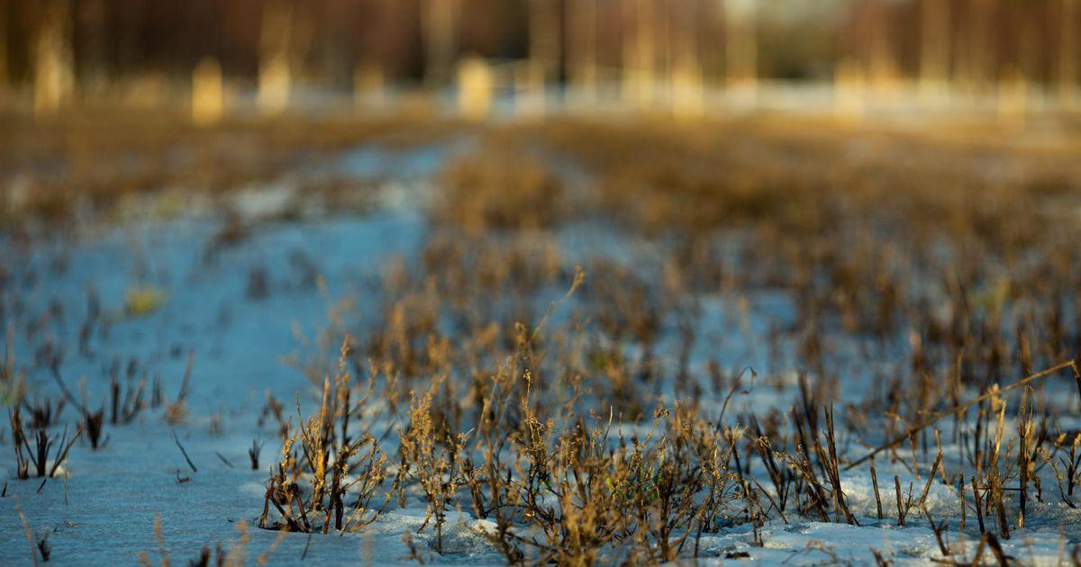 Maa-amet pani Pärnumaal enampakkumisele üheksa kinnistut