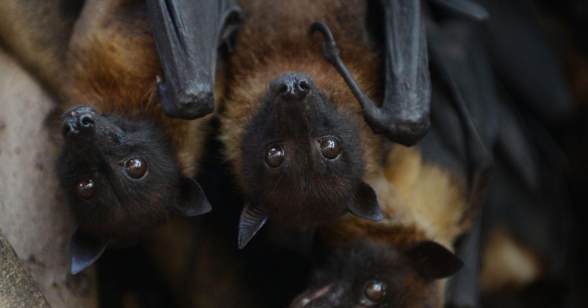 fe1101d4d15 LEMMIKU TEST: kui head on su teadmised nahkhiirtest? - Uudis.eu