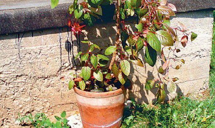 f3232651282 Toalilled puhkavad meelsasti aias - Tarbija