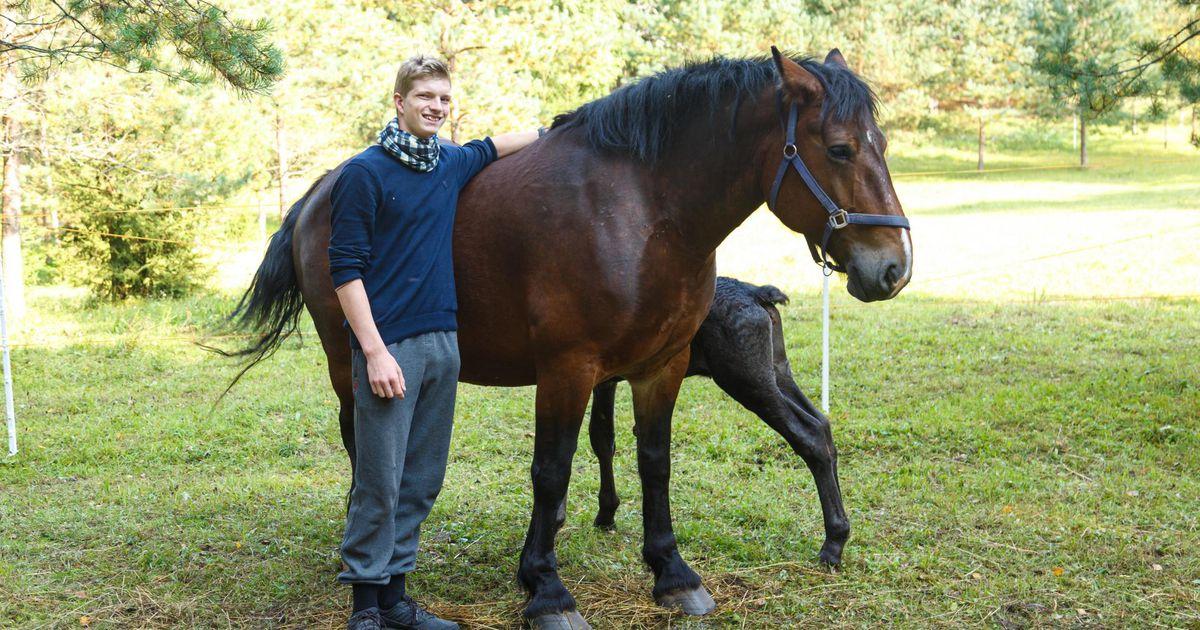 Teadussaate võitja aretab vanas veskitalus hobuseid